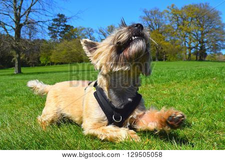 funny dog low angled rural woodland background view