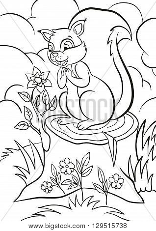 Coloring page. Little cute squirrel stands on the stump and looks at the beautiful flower. Flower grows from the stump. There are bushes grass and flowers around.