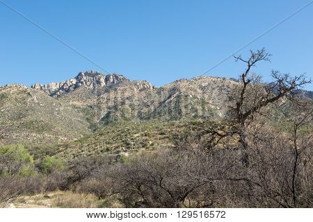 A landscape view of the Arizona desert