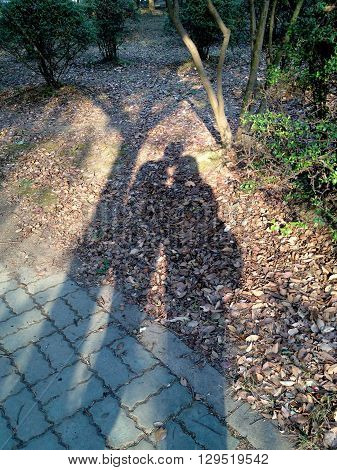 The shadow of a couple cuddling in the woods.