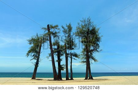 Trees at the beach under blue sky