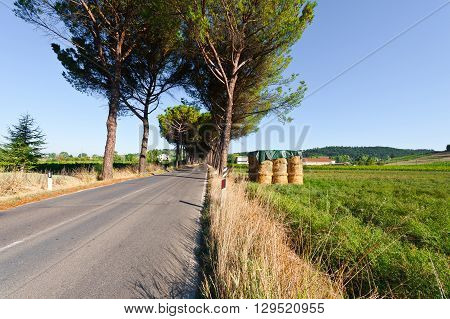 Straight Asphalt Road between the Fields in Italy