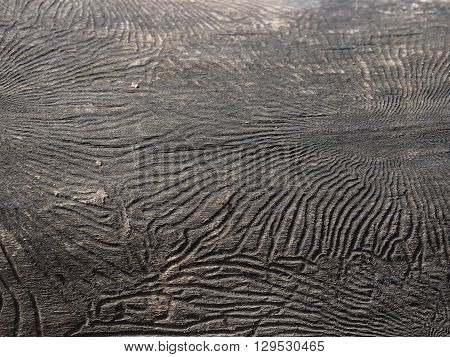 Uneven surface dry wood. Texture. The rough surface, lines, patterns in the bark of a tree