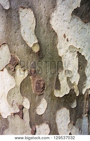 abstract spotty texture of old bark of wood for natural backgrounds and for wallpaper