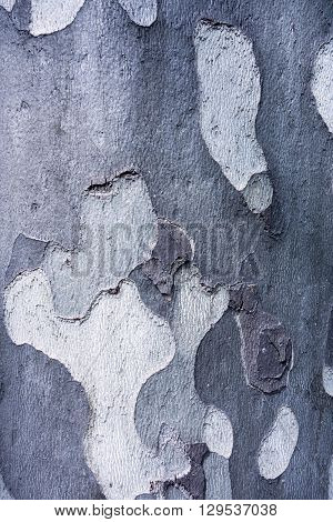 abstract spotty texture of old bark of wood of silvery color for natural backgrounds and for wallpaper