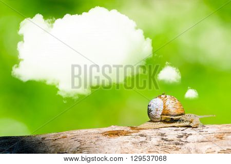 Daydreaming Snail On A Branch