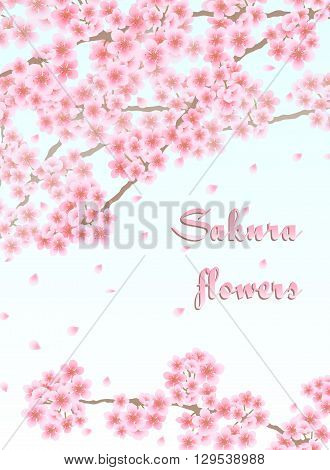 Vector background with sakura branches with pink flowers and falling petals
