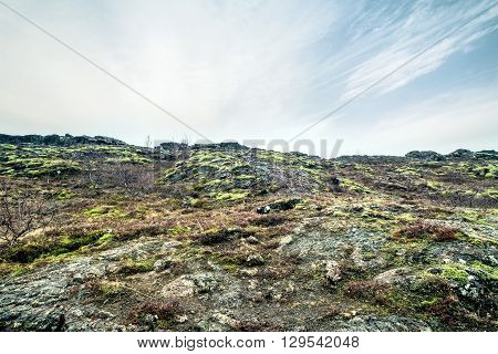 Lava Field In Iceland With Moss