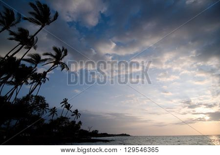 Palm Trees Of Anaehoomalu Beach During Sunset