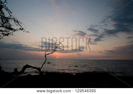 Silhouette Of A Dry Tree At Anaehoomalu Beach During Sunset