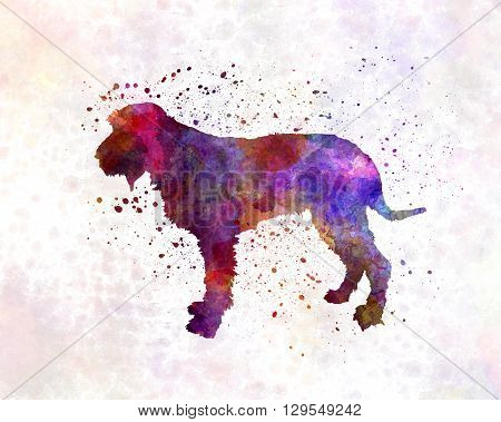Blue Gascony Griffon dog in artistic abstract watercolor background