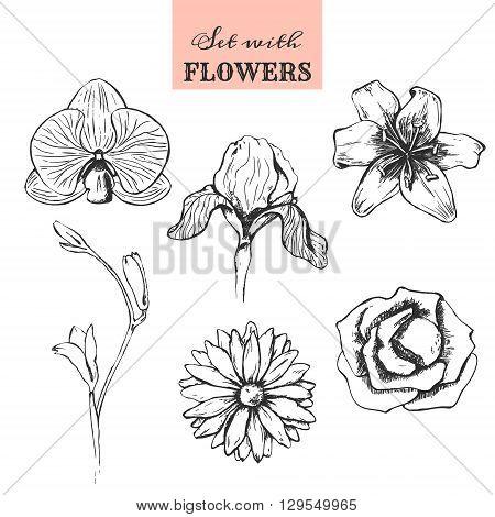 Set with hand drawn flowers. Rose flower iris flower lily flower freesia flower orchid flower chrysanthemum flower. Isolated vector illustration on white background. EPS 10