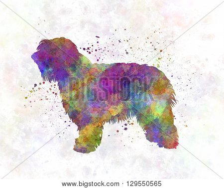 Catalonian Sheepdog dog in artistic abstract watercolor background