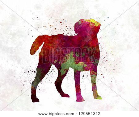 Chesapeake Bay Retriever dog in artistic abstract watercolor background