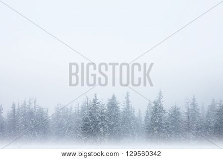 Row of snow-covered trees with winter foggy sky above and mystical haze below