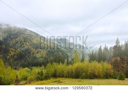 Idyllic mixed forest with meadow and foggy sky landscape