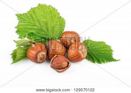 Hazelnut or filbert nuts with leaves on white background