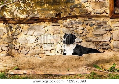 Black and white dog lying on a stone terrace below a rustic stone house looking alertly to the left side of the frame with copy space