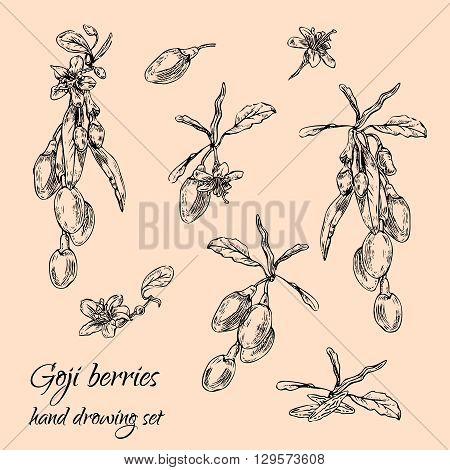 Hand drawn goji berries monochrome set. Engraving illustration. Nature organic superfoods design elements. Vector illustration