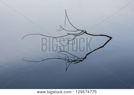 Dry branch in the lake. Minimalism. The quiet surface of water
