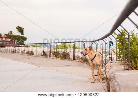 Dog Abandoned