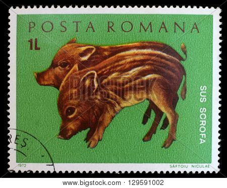 ZAGREB, CROATIA - JULY 19: stamp printed by Romania, shows wild pigs, circa 1972, on July 19, 2012, Zagreb, Croatia