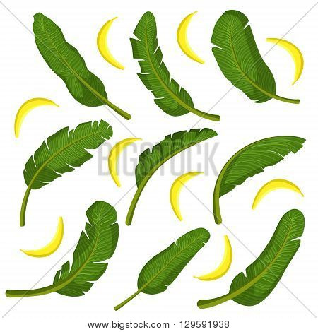 Tropical Leaves With Bananas Flat Bright Color Print In Realistic Vector Design On White Background