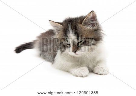 small fluffy kitten lies on a white background. horizontal photo.