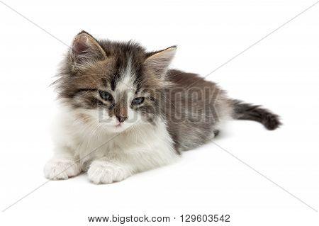 fluffy kitten lies on a white background close-up. horizontal photo.