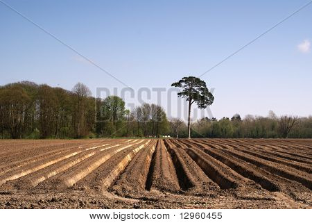 Ploughland in East Anglia