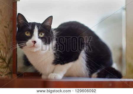 The cat of a black-and-white color sits