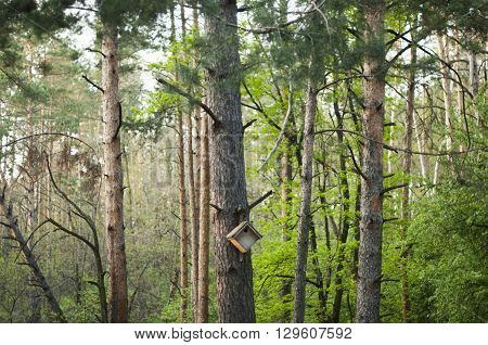 wooden birdhouse handmade on a tree in the forest