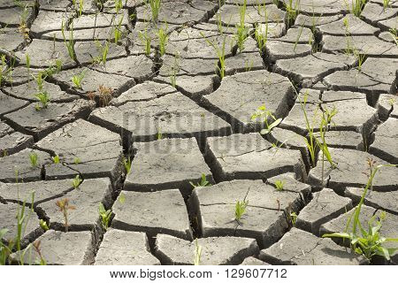 Soil And Grass During Drought Cracks