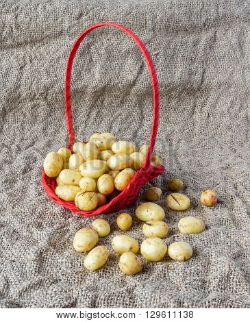 Red basket of fresh tasty new potatoes on a background of burlap.