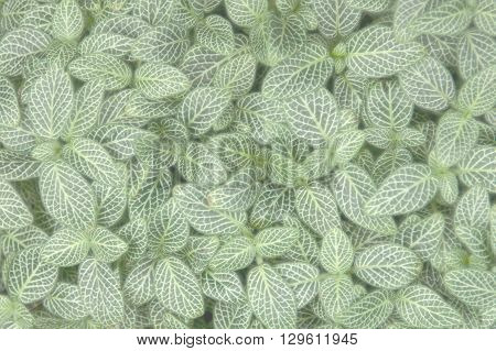 live carpet of green and white plants leaves