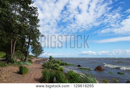 Landscape with trees growing on Baltic sea coast