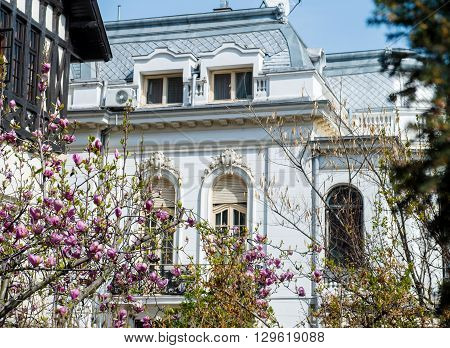 Old luxury building in central Bucharest Romania with beautiful pink magnolia in bloom