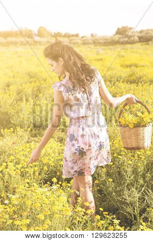 Pretty Young Woman In A Field Picking Daisies