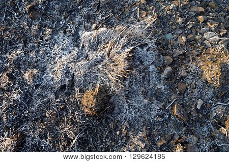 burnt grass on the ground as background