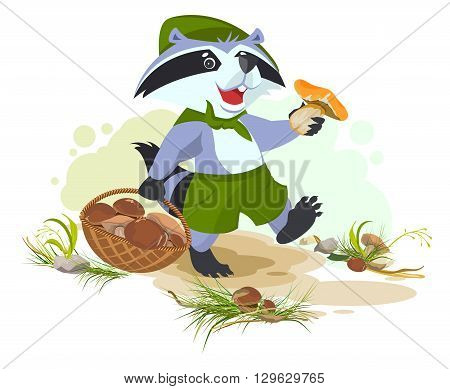 Raccoon scout collects mushrooms. Mushroomer picker with basket. Vector cartoon illustration