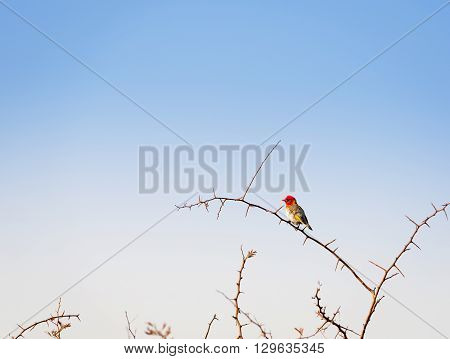Bird In Botswana Africa