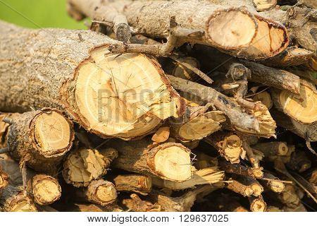 Woodpile Of Firewood. Chopped Firewood For Home Heating Are The Woodpiles In The Yard. Chopped Trees