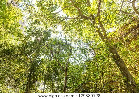 Jungle Canopy Africa