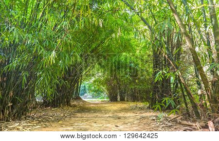 Beautiful bamboo tree forest path with line up along roadsides create dirt road leading down Into the small road at beautiful horizon in Binh Duong, Vietnam