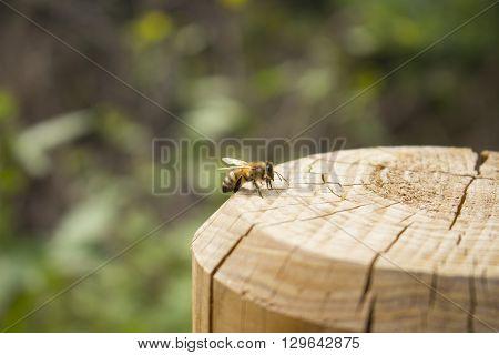 Ape sul ceppo di legno nell'oasi naturalistica