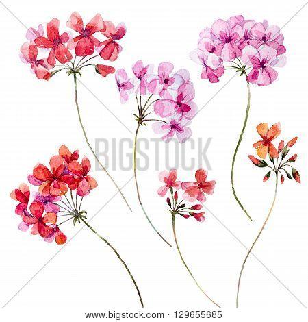 Beautiful set with nice watercolor hand drawn geranium flowers