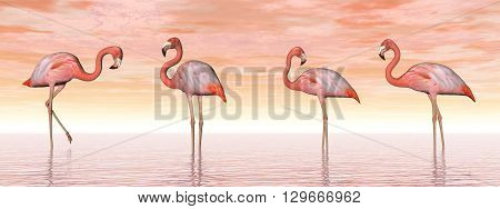 Four pink flamingos standing in water by sunset light - 3D render