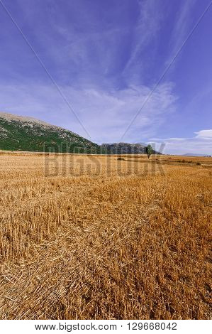 The Fields in the Cantabrian Mountain Spain