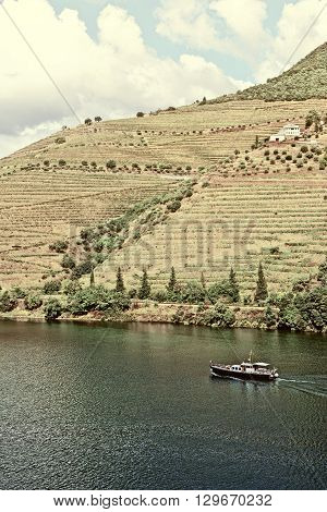 Vineyards in the Valley of the River Douro Portugal Vintage Style Toned Picture