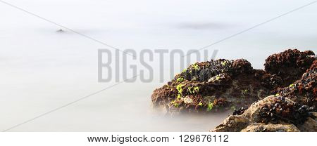 Black Mussels On The Rocks Emerge From The Fog Almost Unreal